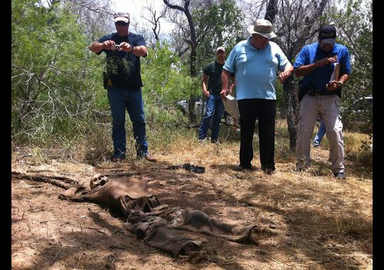 Border Patrol Agent Ryan Osburn snaps a picture of the remains of a body believed to be an undocumented immigrant found on a private ranch in Brooks County in south Texas, as Roel Villarreal, a Brooks County Justice of the Peace, and Brooks County Sheriff's Deputy Rolando Gutierrez look on.(Photo: Rick Jervis, USA TODAY)