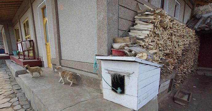 homestay-chilbo-dogs